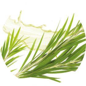Bioaktív Teafa